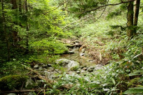 森きち サイト横の川