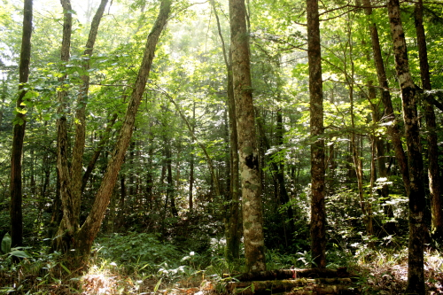 森きち 2日目朝の林間