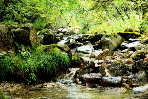 森きち 細い川の侘びさび