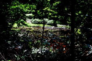 森きち 隕石瑚へ2