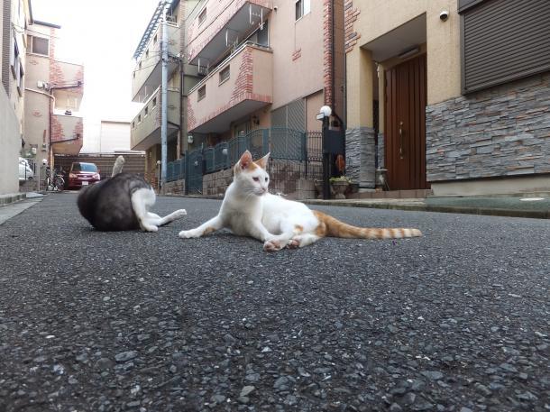 猫5,7,8