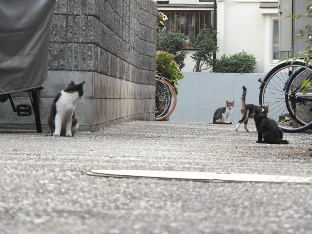 猫7,8,9,10