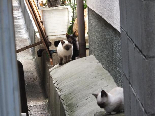 猫18,19,20,21,22