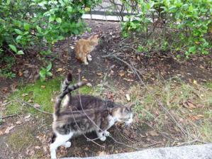 猫1,2,3