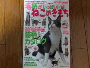 猫のきもち