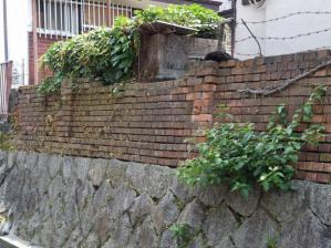 煉瓦塀、猫3