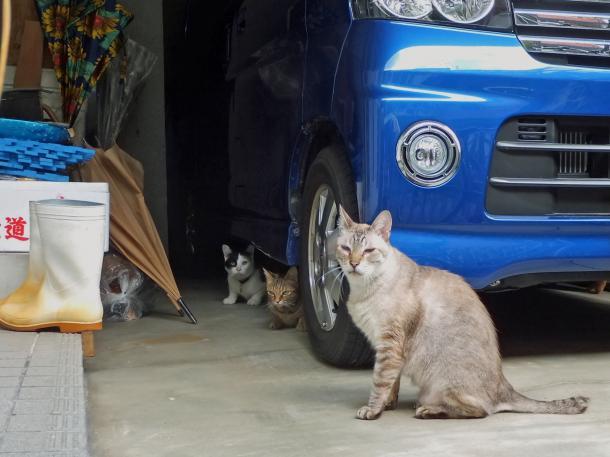 猫9,10,13