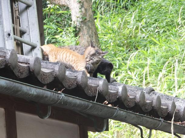猫10,12,13