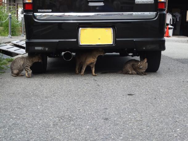 猫33,35,39