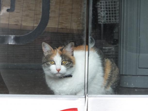 お店の猫さん