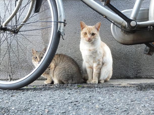 猫27,30