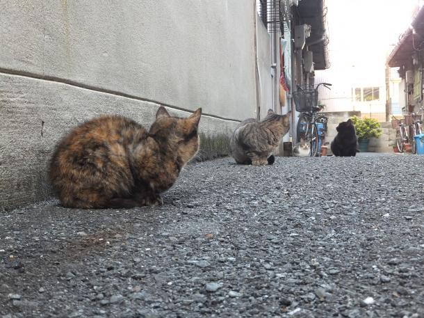 猫34,35,36,37