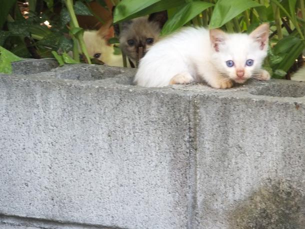 猫6,8,9