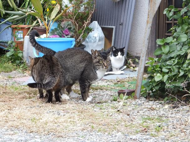 猫14,18,20,21
