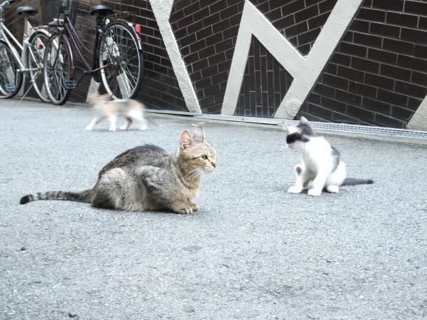 猫16,18,19