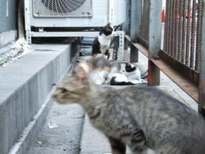 猫15,16,18,19