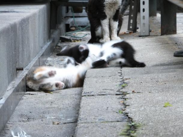 猫15,16,18