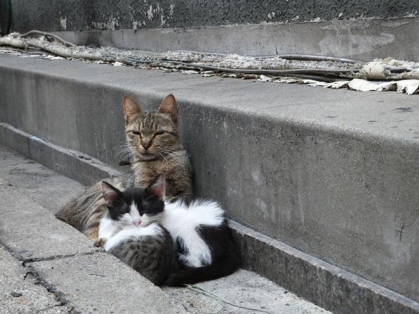 猫16,19,20