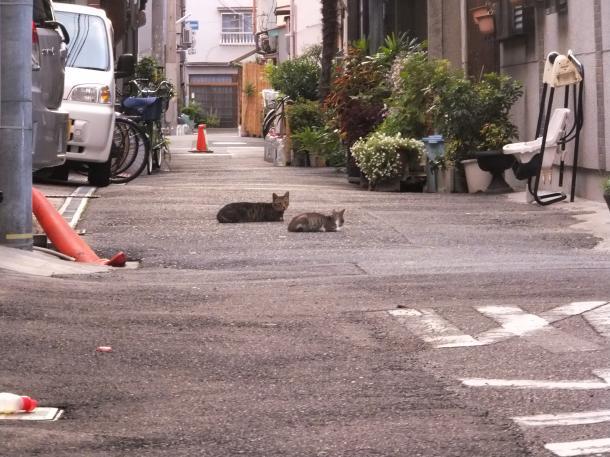 猫11、12