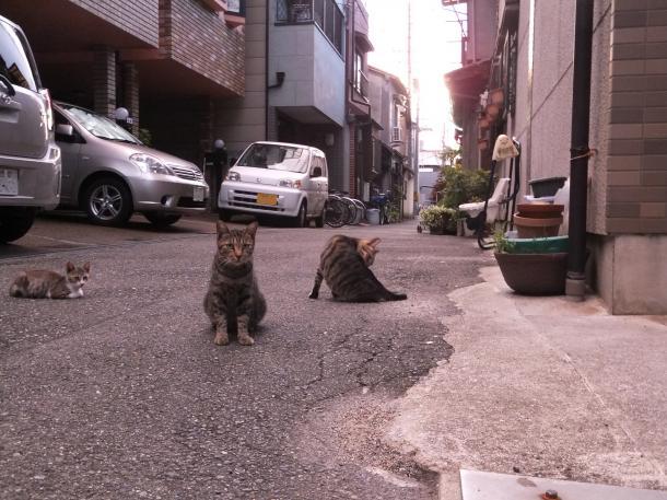 猫11,12,16
