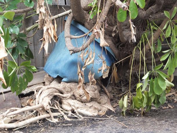 植木鉢を破壊