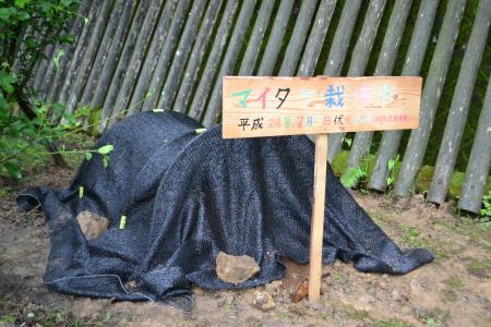 maitake11_20120704121707.jpg