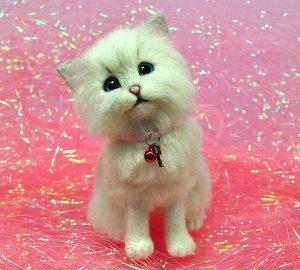 チンチラシルバー仔猫12-12 011