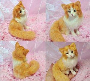 メインクーン猫白茶12-10 021