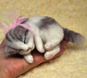 白サバ仔猫睡眠中12-11 027