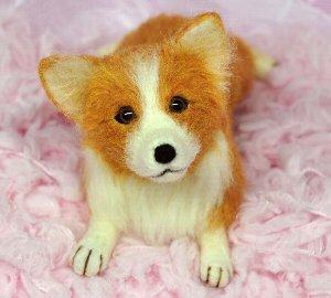 コーギー犬12-10 036