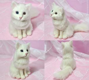 オッドアイ白猫13-01-25 029