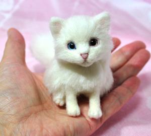 オッドアイ白猫13-01-25 084