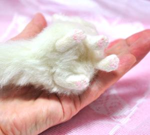 オッドアイ白猫13-01-25 0072