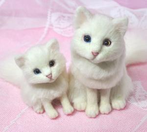 オッドアイ白猫13-01-25 099