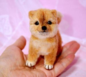 豆芝犬13-01-31 027