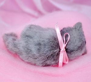ミニサバトラ子猫13-03-17 006
