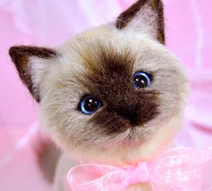 バーマン猫13-03-27 035