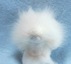 北海道犬13-04-06 001