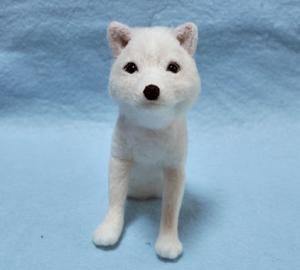 北海道犬13-04-06 009