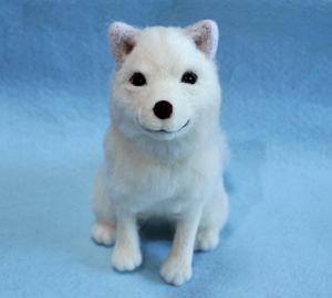 北海道犬13-04-09 005