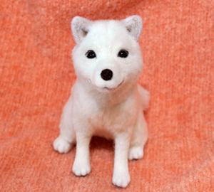 北海道犬13-04-09 043