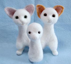 2猫+プードル130622 009