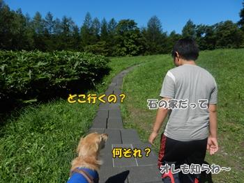 観光地の中を犬と歩く
