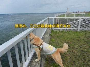 ここが最北の地か~の犬
