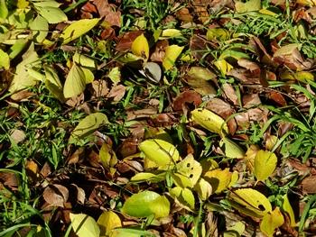 秋、落ち葉