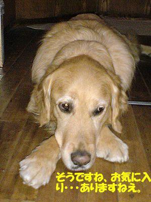 考える犬(腕クロス)