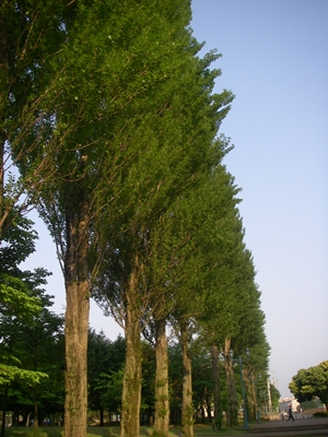 S公園並木