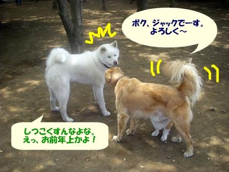 秋田犬のヒカルくん