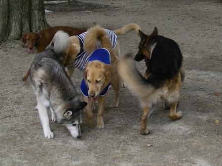 大型犬団子状態