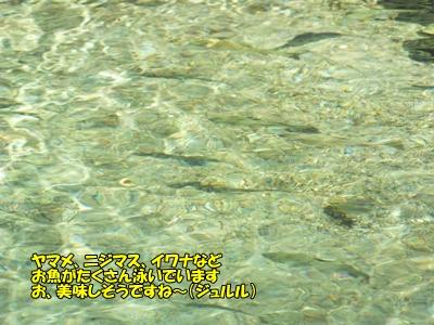 お魚がいるよ!